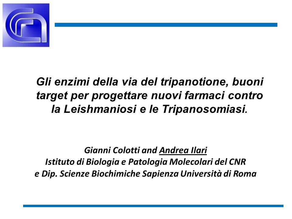 2 Glutatione + Spermidina T[SH] 2 Trypanothione synthetase T[S] 2 Trypanothione reductase Tryparedoxin peroxidase TXN[SH] 2 TXN[S] 2 ROOH ROH + H 2 O Metabolismo del tripanotione Colotti, Ilari, 2011.