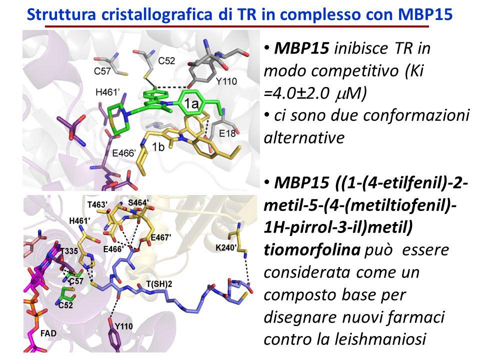 Struttura cristallografica di TR in complesso con MBP15 MBP15 inibisce TR in modo competitivo (Ki =4.0±2.0  M) ci sono due conformazioni alternative