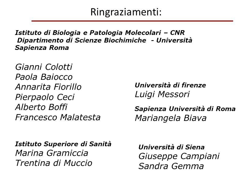Ringraziamenti: Istituto di Biologia e Patologia Molecolari – CNR Dipartimento di Scienze Biochimiche - Università Sapienza Roma Gianni Colotti Paola