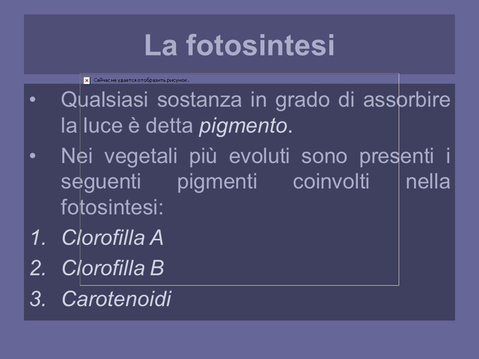La fotosintesi Qualsiasi sostanza in grado di assorbire la luce è detta pigmento.
