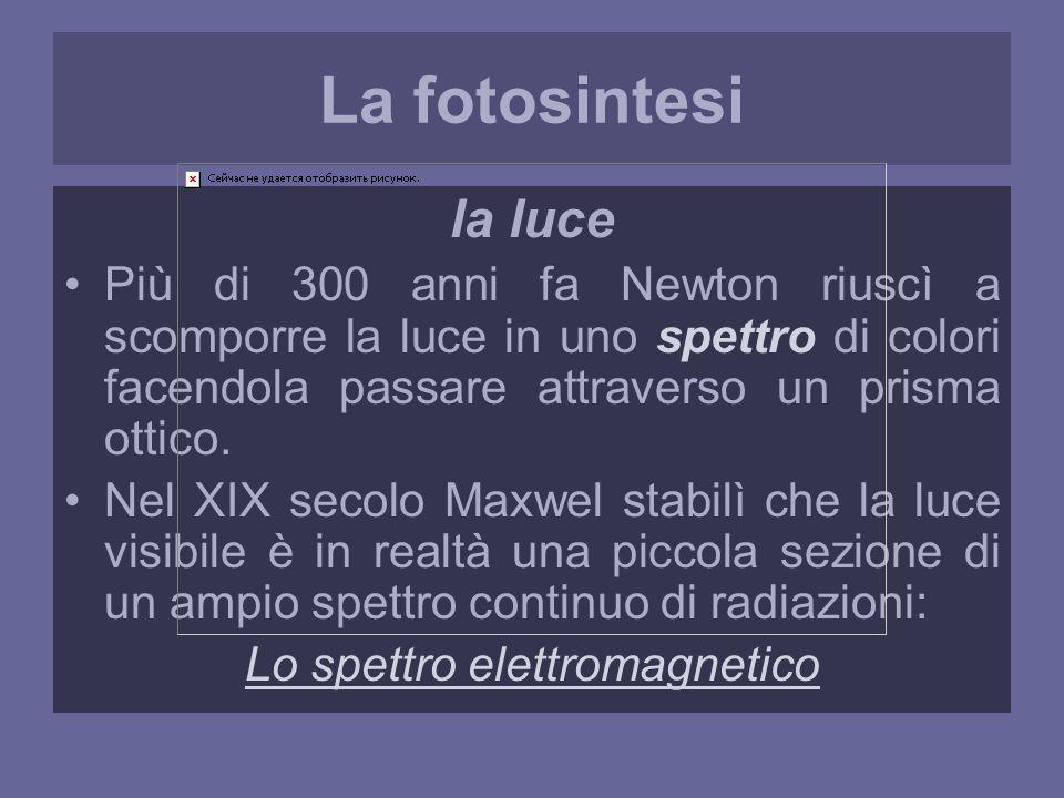 La fotosintesi la luce Più di 300 anni fa Newton riuscì a scomporre la luce in uno spettro di colori facendola passare attraverso un prisma ottico.