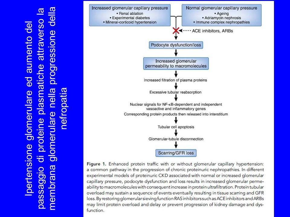 Ipertensione glomerulare ed aumento del passaggio di proteine plasmatiche attraverso la membrana glomerulare nella progressione della nefropatia