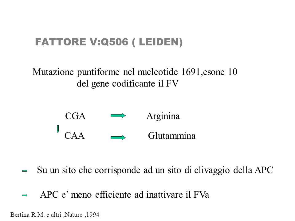 FATTORE V:Q506 ( LEIDEN) Mutazione puntiforme nel nucleotide 1691,esone 10 del gene codificante il FV CGAArginina CAAGlutammina Su un sito che corrisp