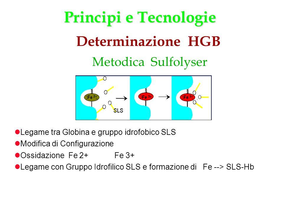 Legame tra Globina e gruppo idrofobico SLS Modifica di Configurazione Ossidazione Fe 2+ Fe 3+ Legame con Gruppo Idrofilico SLS e formazione di Fe -->