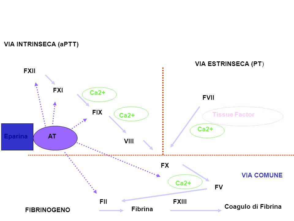 FIBRINOGENO FVII Tissue Factor Ca2+ FXII FXI FIX VIII Ca2+ FX Ca2+ FV Fibrina Coagulo di Fibrina FIIFXIII EparinaAT VIA INTRINSECA (aPTT) VIA ESTRINSE