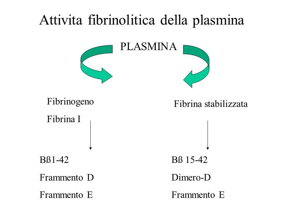 Attivita fibrinolitica della plasmina Fibrinogeno Fibrina I PLASMINA Fibrina stabilizzata Bß1-42 Frammento D Frammento E Bß 15-42 Dimero-D Frammento E