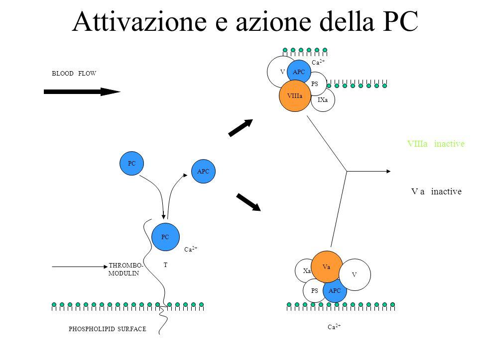 Attivazione e azione della PC APC T IXa PS V APC VIIIa Xa PSAPC Va V BLOOD FLOW THROMBO- MODULIN PHOSPHOLIPID SURFACE VIIIa inactive V a inactive Ca 2