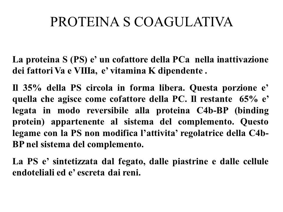 PROTEINA S COAGULATIVA La proteina S (PS) e' un cofattore della PCa nella inattivazione dei fattori Va e VIIIa, e' vitamina K dipendente. Il 35% della