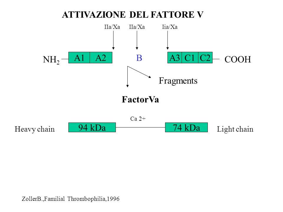 C1BA1A2A3C2 NH 2 COOH IIa/Xa Iia/Xa FactorVa Fragments 94 kDa74 kDa Ca 2+ ATTIVAZIONE DEL FATTORE V ZollerB.,Familial Thrombophilia,1996 Heavy chainLi