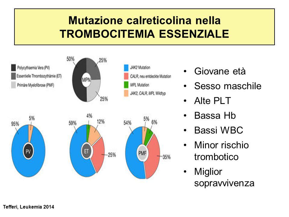 Mutazione calreticolina nella TROMBOCITEMIA ESSENZIALE Giovane età Sesso maschile Alte PLT Bassa Hb Bassi WBC Minor rischio trombotico Miglior sopravvivenza Tefferi, Leukemia 2014
