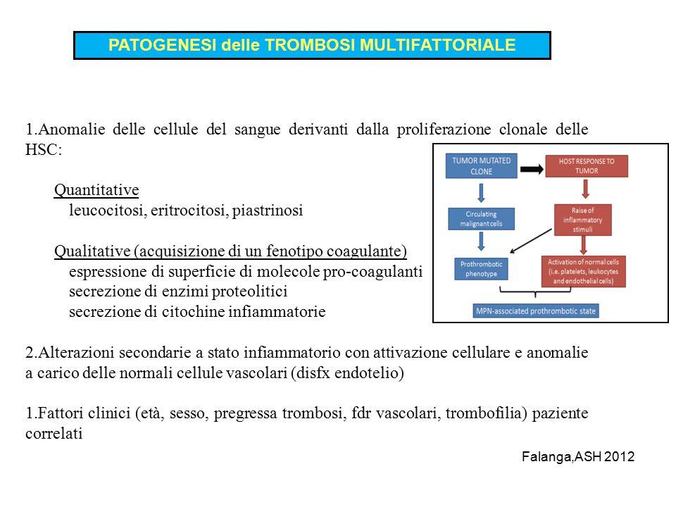 1.Anomalie delle cellule del sangue derivanti dalla proliferazione clonale delle HSC: Quantitative leucocitosi, eritrocitosi, piastrinosi Qualitative (acquisizione di un fenotipo coagulante) espressione di superficie di molecole pro-coagulanti secrezione di enzimi proteolitici secrezione di citochine infiammatorie 2.Alterazioni secondarie a stato infiammatorio con attivazione cellulare e anomalie a carico delle normali cellule vascolari (disfx endotelio) 1.Fattori clinici (età, sesso, pregressa trombosi, fdr vascolari, trombofilia) paziente correlati PATOGENESI delle TROMBOSI MULTIFATTORIALE Falanga,ASH 2012