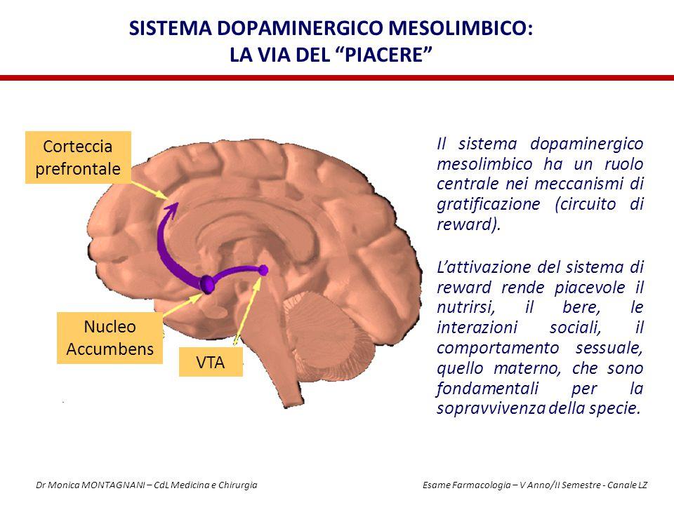 """SISTEMA DOPAMINERGICO MESOLIMBICO: LA VIA DEL """"PIACERE"""" Corteccia prefrontale Nucleo Accumbens VTA Il sistema dopaminergico mesolimbico ha un ruolo ce"""