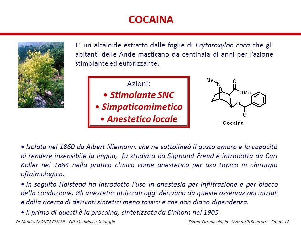 COCAINA E' un alcaloide estratto dalle foglie di Erythroxylon coca che gli abitanti delle Ande masticano da centinaia di anni per l'azione stimolante