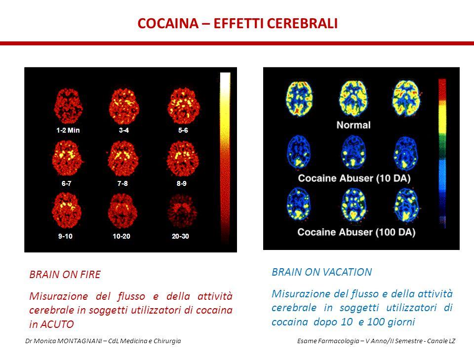 BRAIN ON FIRE Misurazione del flusso e della attività cerebrale in soggetti utilizzatori di cocaina in ACUTO COCAINA – EFFETTI CEREBRALI BRAIN ON VACA