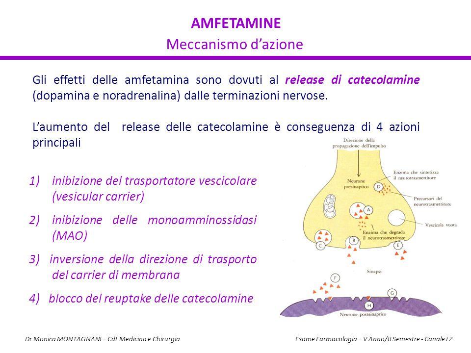 AMFETAMINE Meccanismo d'azione Gli effetti delle amfetamina sono dovuti al release di catecolamine (dopamina e noradrenalina) dalle terminazioni nervo