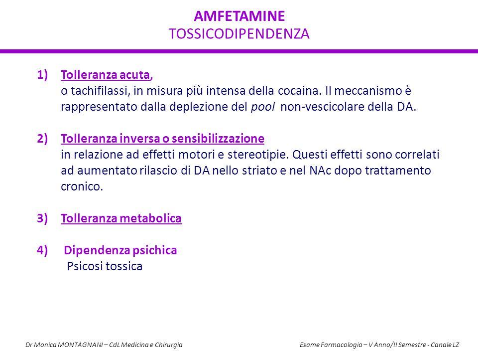 AMFETAMINE TOSSICODIPENDENZA 1)Tolleranza acuta, o tachifilassi, in misura più intensa della cocaina. Il meccanismo è rappresentato dalla deplezione d