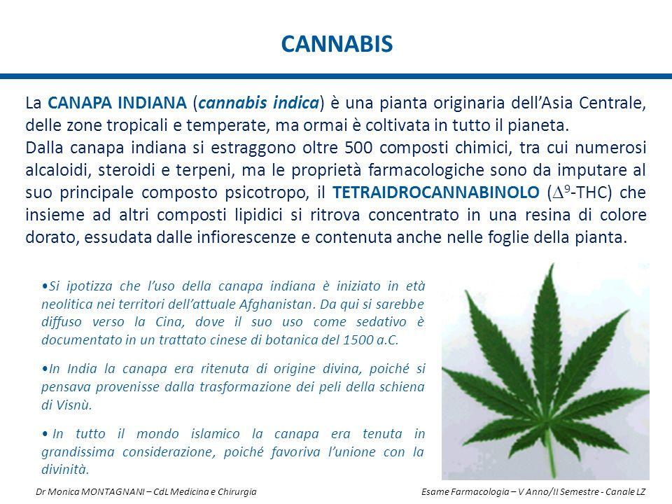 CANNABIS La CANAPA INDIANA (cannabis indica) è una pianta originaria dell'Asia Centrale, delle zone tropicali e temperate, ma ormai è coltivata in tut