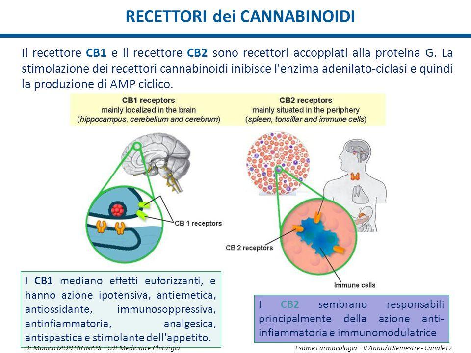 RECETTORI dei CANNABINOIDI I CB2 sembrano responsabili principalmente della azione anti- infiammatoria e immunomodulatrice Il recettore CB1 e il recet