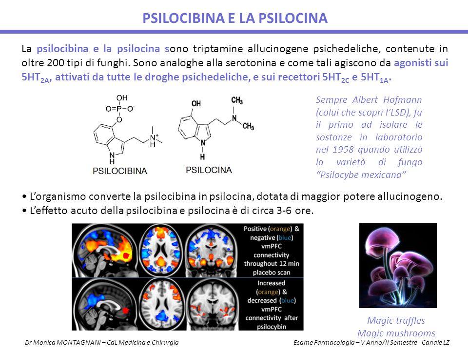 La psilocibina e la psilocina sono triptamine allucinogene psichedeliche, contenute in oltre 200 tipi di funghi. Sono analoghe alla serotonina e come