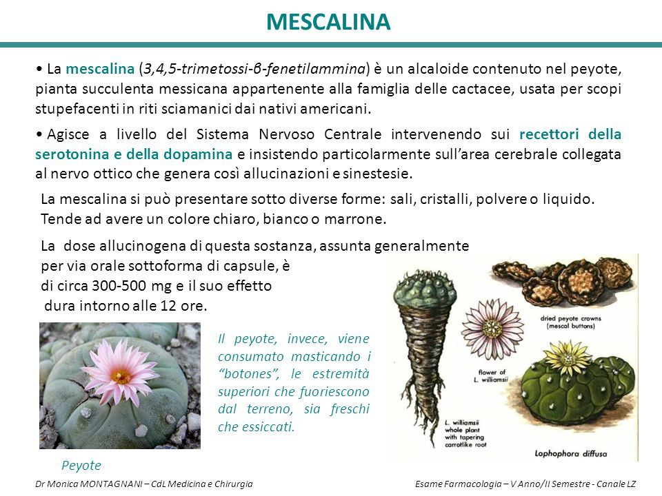 La mescalina (3,4,5-trimetossi-β-fenetilammina) è un alcaloide contenuto nel peyote, pianta succulenta messicana appartenente alla famiglia delle cact