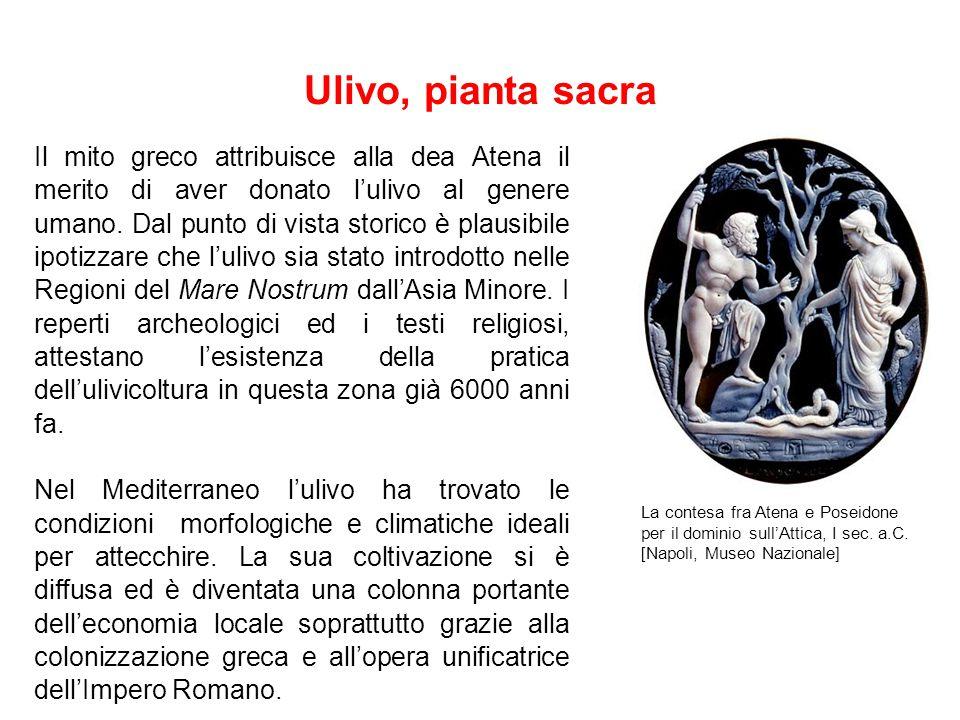 Ulivo, pianta sacra Il mito greco attribuisce alla dea Atena il merito di aver donato l'ulivo al genere umano.