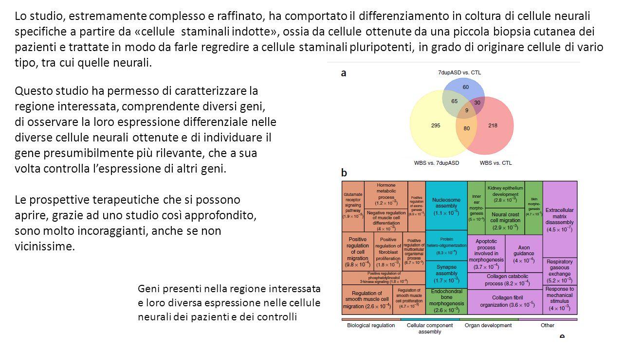 Lo studio, estremamente complesso e raffinato, ha comportato il differenziamento in coltura di cellule neurali specifiche a partire da «cellule stamin