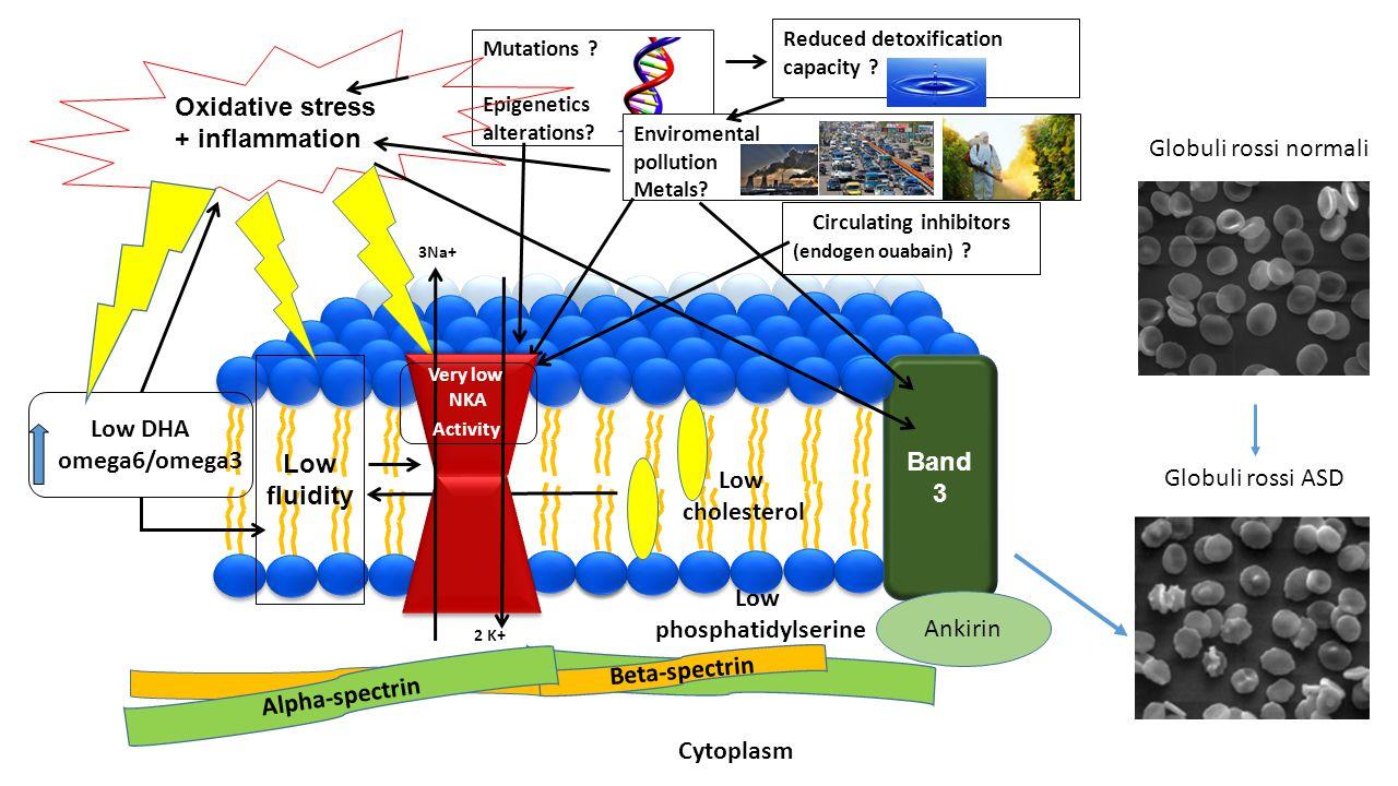 Mutations ? Epigenetics alterations? Reduced detoxification capacity ? Oxidative stress + inflammation Low fluidity Low DHA omega6/omega3 Low choleste