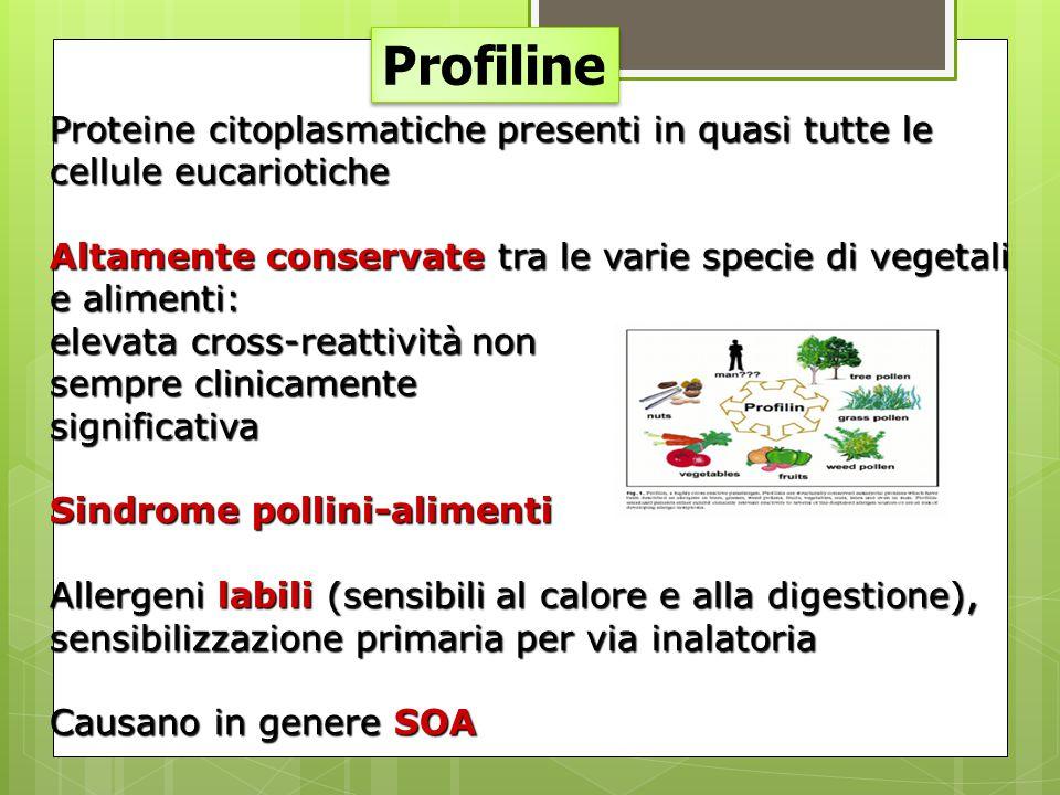 Profiline Proteine citoplasmatiche presenti in quasi tutte le cellule eucariotiche Altamente conservate tra le varie specie di vegetali e alimenti: el