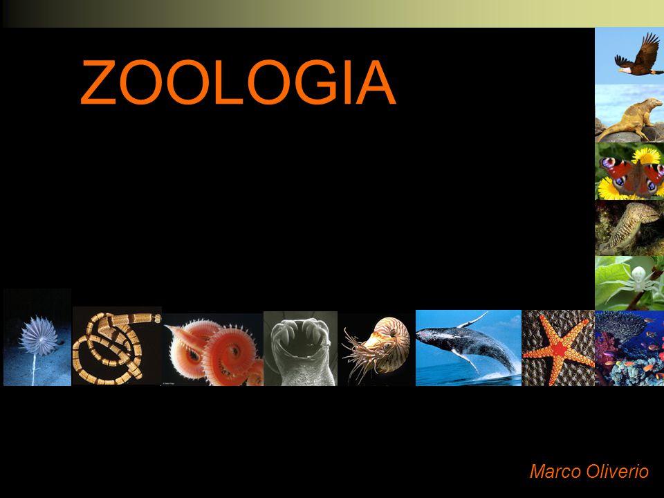 ZOOLOGIA Marco Oliverio