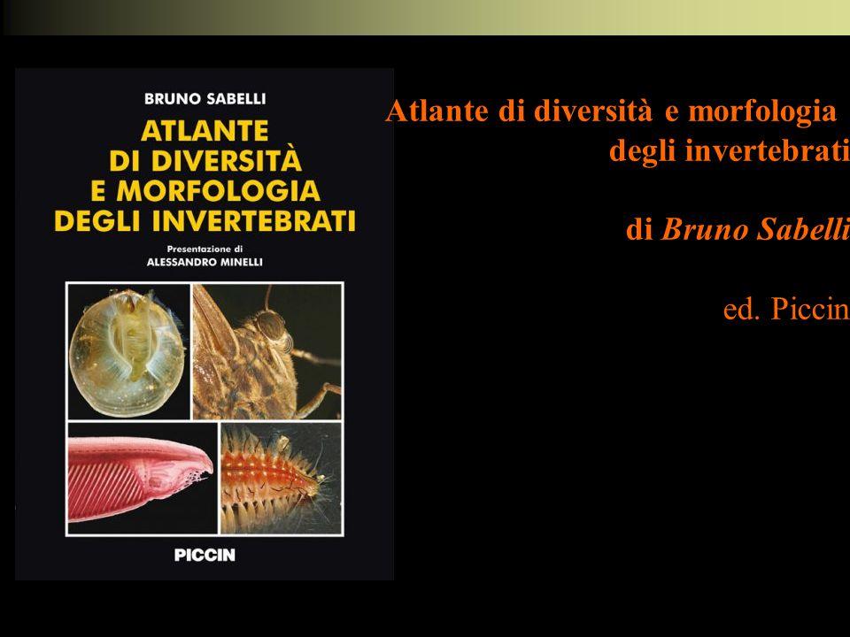 Atlante di diversità e morfologia degli invertebrati di Bruno Sabelli ed. Piccin