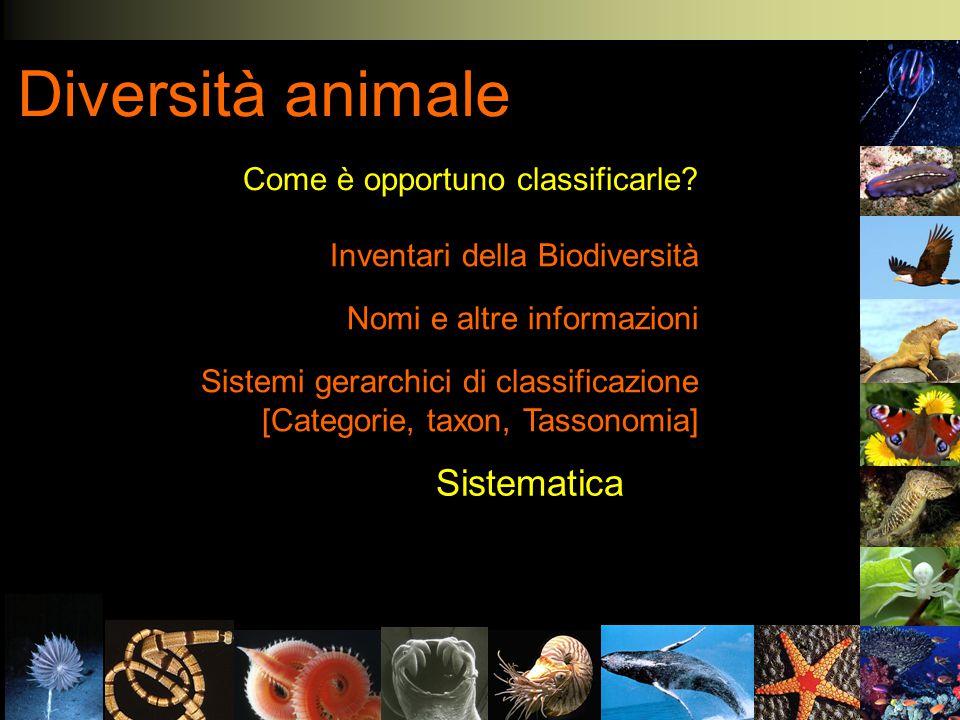 Diversità animale Come è opportuno classificarle? Inventari della Biodiversità Nomi e altre informazioni Sistemi gerarchici di classificazione [Catego
