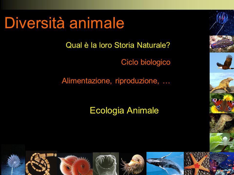 Diversità animale Qual è la loro Storia Naturale? Ciclo biologico Alimentazione, riproduzione, … Ecologia Animale