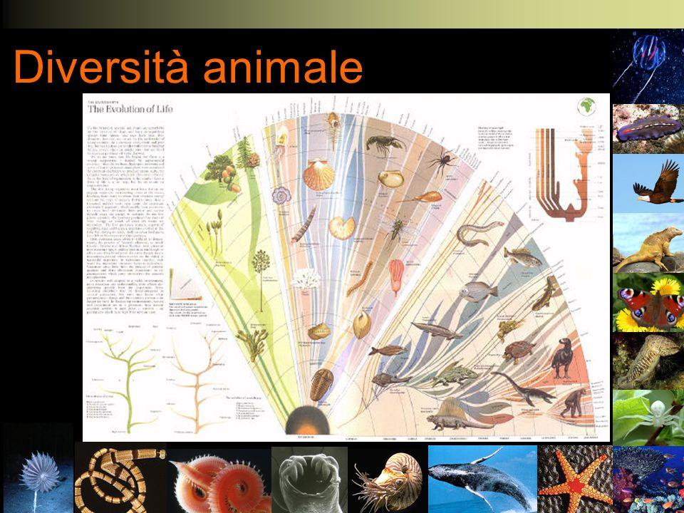 Diversità animale Come sono venute all'esistenza? Biologia Evoluzionistica