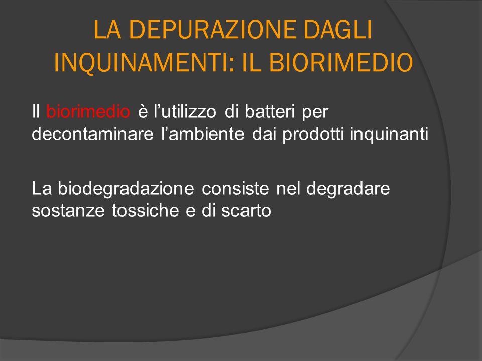 LA DEPURAZIONE DAGLI INQUINAMENTI: IL BIORIMEDIO Il biorimedio è l'utilizzo di batteri per decontaminare l'ambiente dai prodotti inquinanti La biodegr