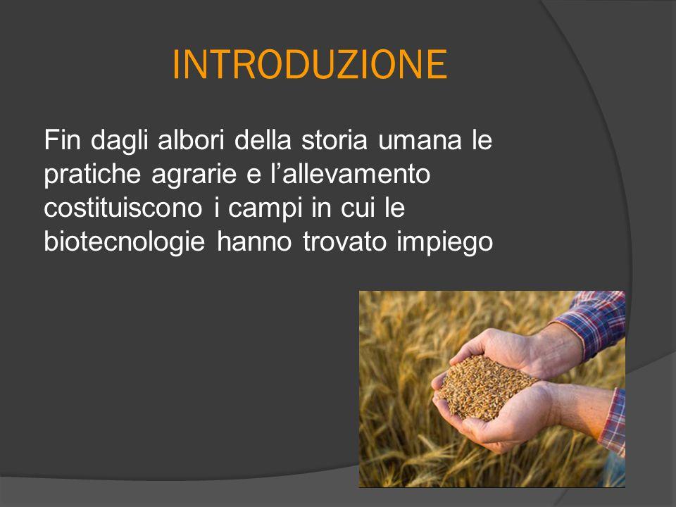 INTRODUZIONE Fin dagli albori della storia umana le pratiche agrarie e l'allevamento costituiscono i campi in cui le biotecnologie hanno trovato impie