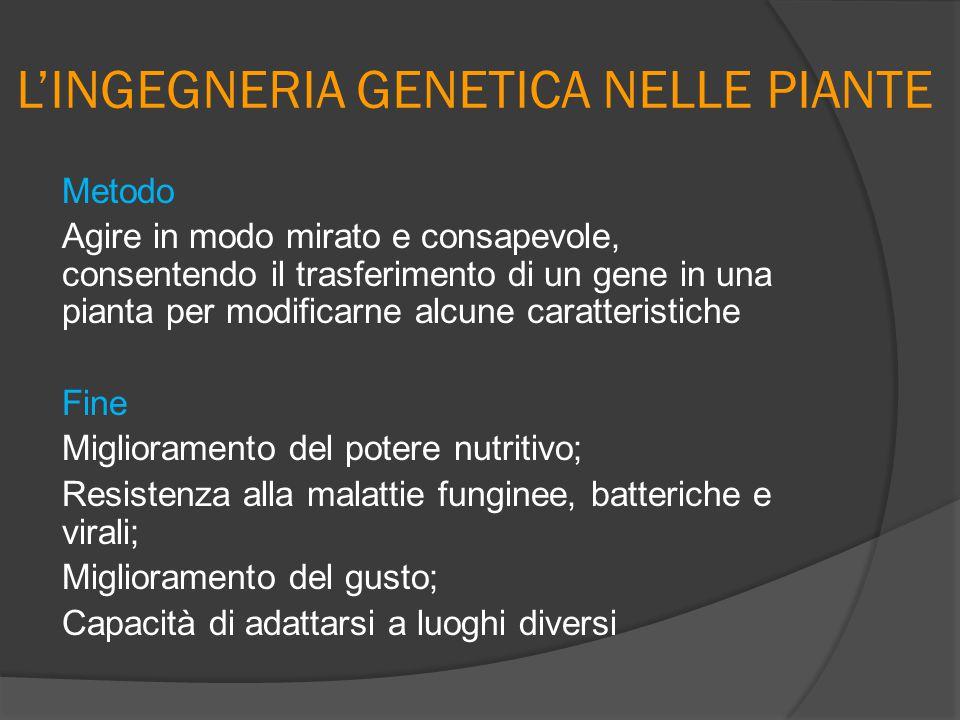 L'INGEGNERIA GENETICA NELLE PIANTE Metodo Agire in modo mirato e consapevole, consentendo il trasferimento di un gene in una pianta per modificarne al