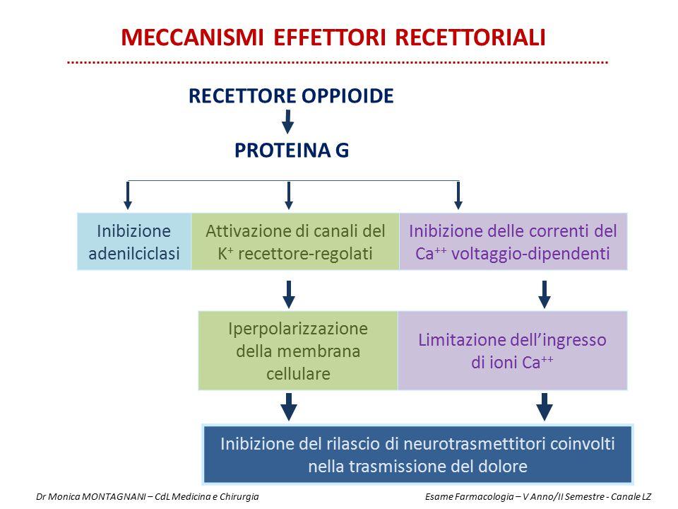 RECETTORE OPPIOIDE PROTEINA G Inibizione adenilciclasi Attivazione di canali del K + recettore-regolati Inibizione delle correnti del Ca ++ voltaggio-
