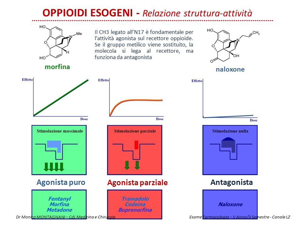 Agonista puro Agonista parziale Antagonista OPPIOIDI ESOGENI - Relazione struttura-attività morfina naloxone Il CH3 legato all'N17 è fondamentale per