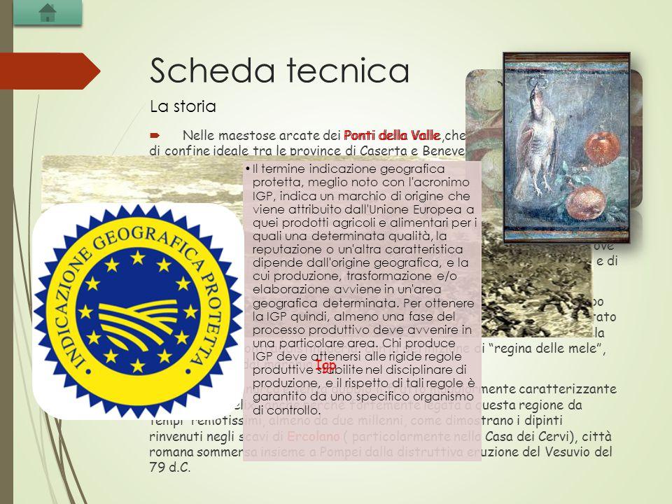 Scheda tecnica  Nelle maestose arcate dei Ponti della Valle,che rappresentavano la linea di confine ideale tra le province di Caserta e Benevento, regna l'antichissimo e saporito frutto della mela annurca.