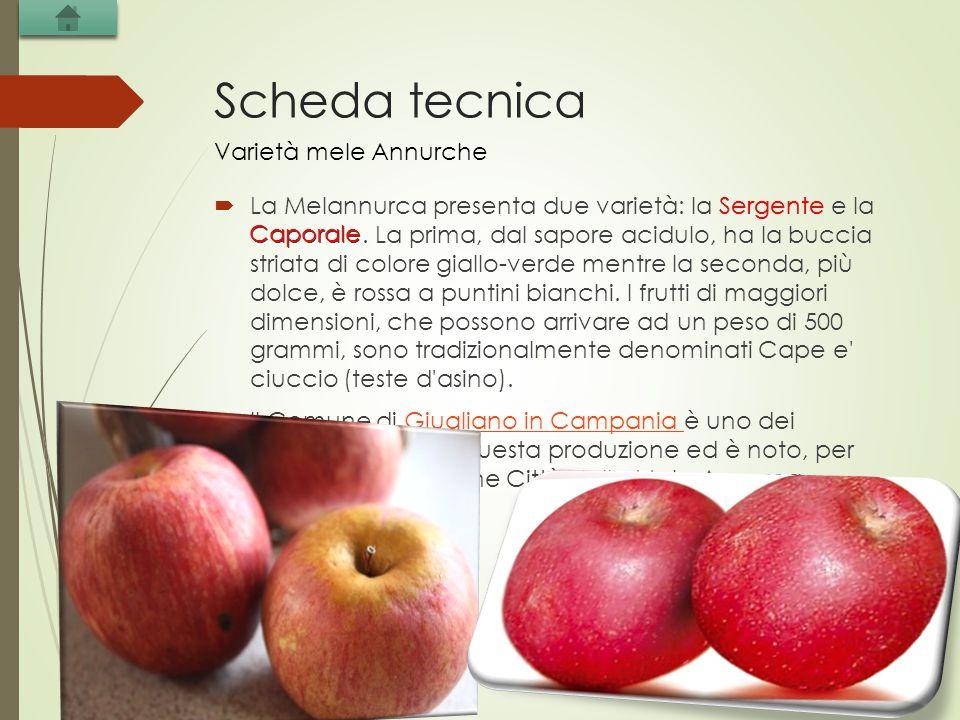 Scheda tecnica  La Melannurca presenta due varietà: la Sergente e la Caporale. La prima, dal sapore acidulo, ha la buccia striata di colore giallo-ve