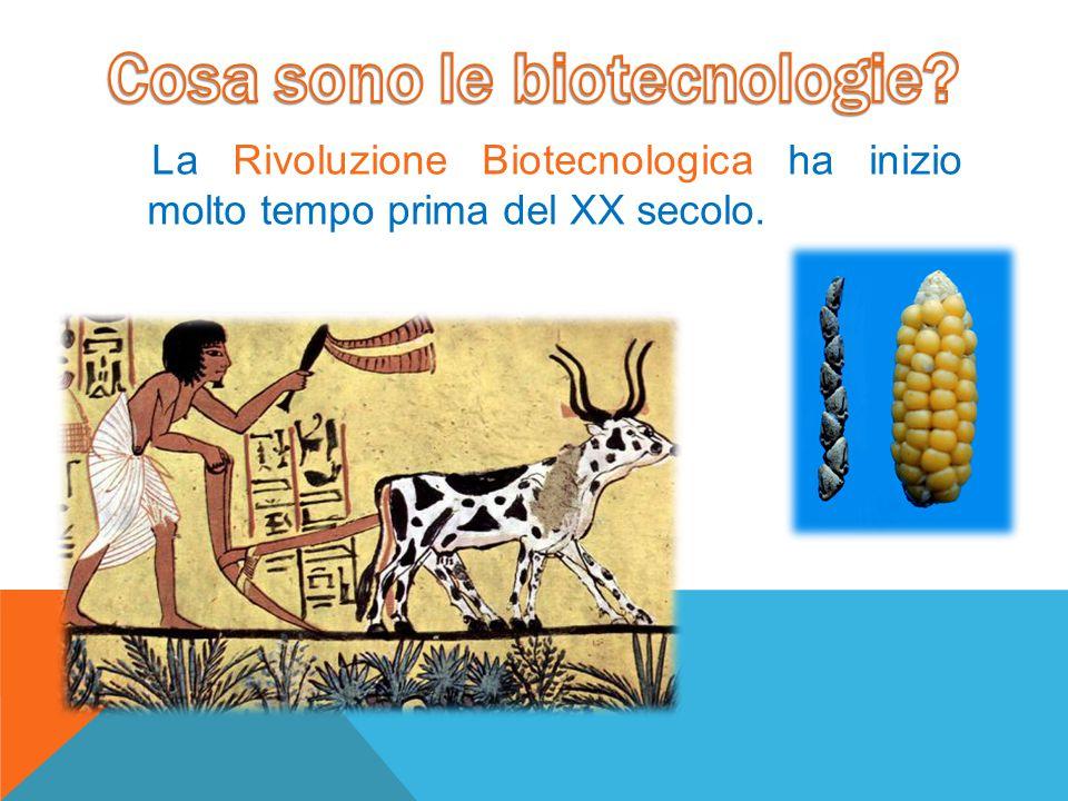La Rivoluzione Biotecnologica ha inizio molto tempo prima del XX secolo.