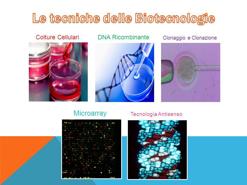 Colture CellulariDNA Ricombinante Clonaggio e Clonazione Microarray Tecnologia Antisenso