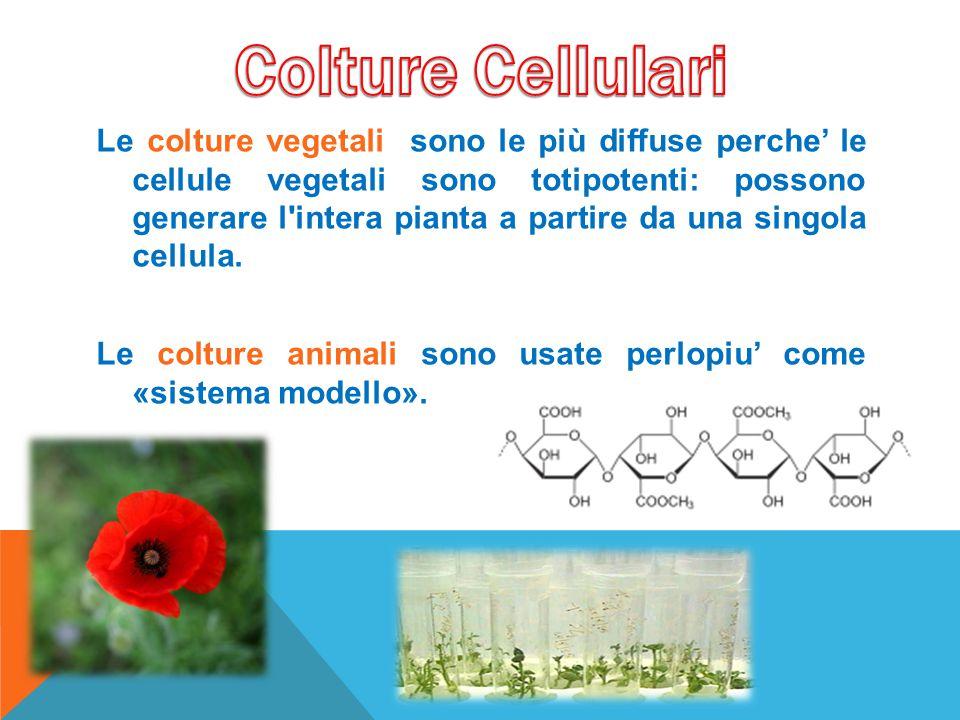 Le colture vegetali sono le più diffuse perche' le cellule vegetali sono totipotenti: possono generare l'intera pianta a partire da una singola cellul