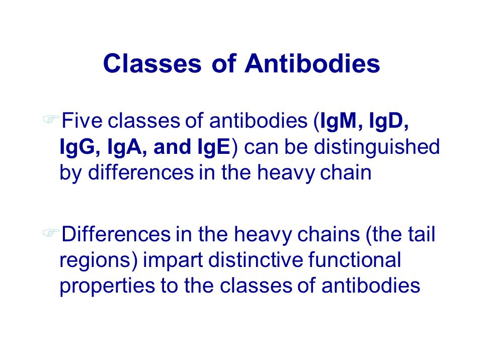 Classes of Antibodies FFive classes of antibodies (IgM, IgD, IgG, IgA, and IgE) can be distinguished by differences in the heavy chain FDifferences in