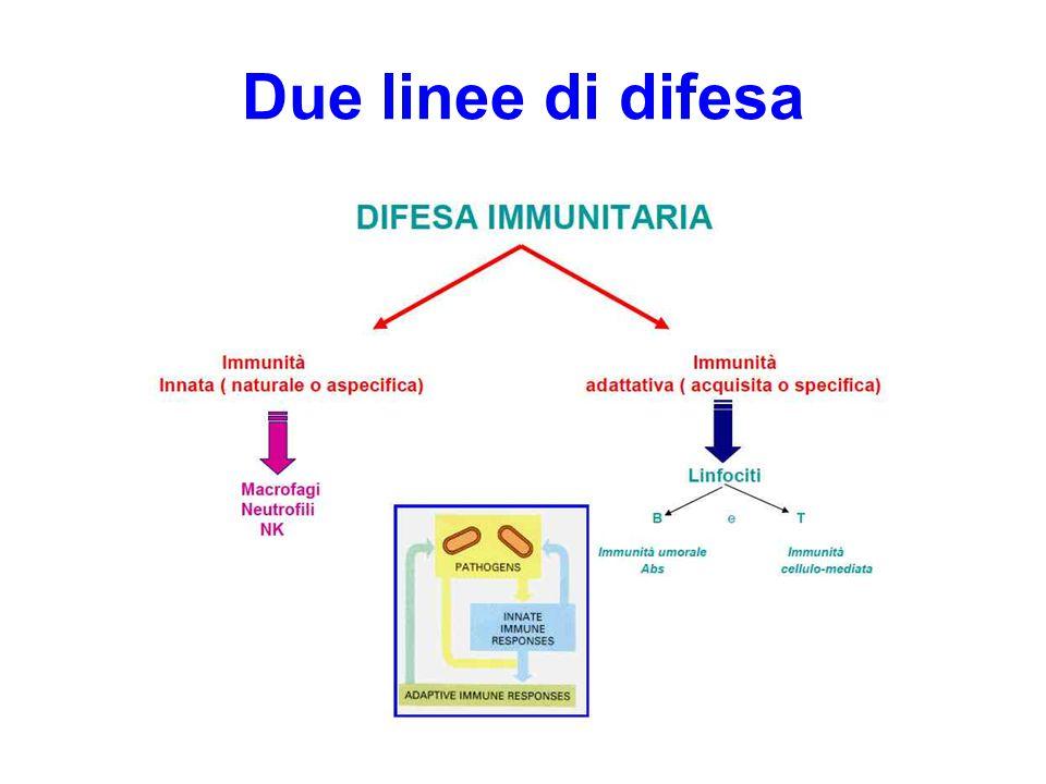FClass I: HLA-A, -B, -C.