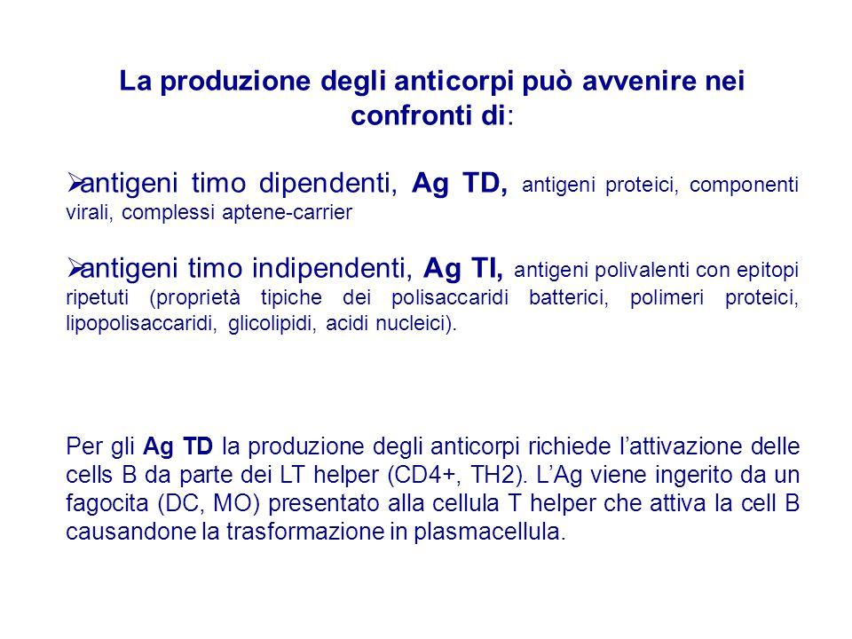 La produzione degli anticorpi può avvenire nei confronti di:  antigeni timo dipendenti, Ag TD, antigeni proteici, componenti virali, complessi aptene