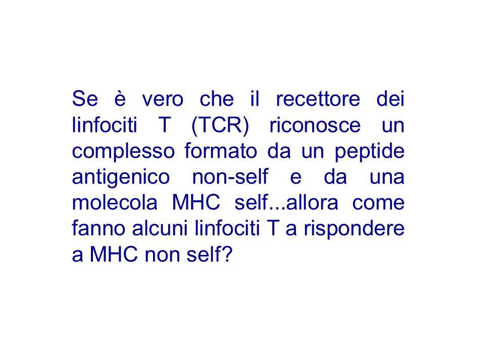 Se è vero che il recettore dei linfociti T (TCR) riconosce un complesso formato da un peptide antigenico non-self e da una molecola MHC self...allora