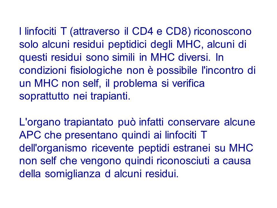 l linfociti T (attraverso il CD4 e CD8) riconoscono solo alcuni residui peptidici degli MHC, alcuni di questi residui sono simili in MHC diversi. In c