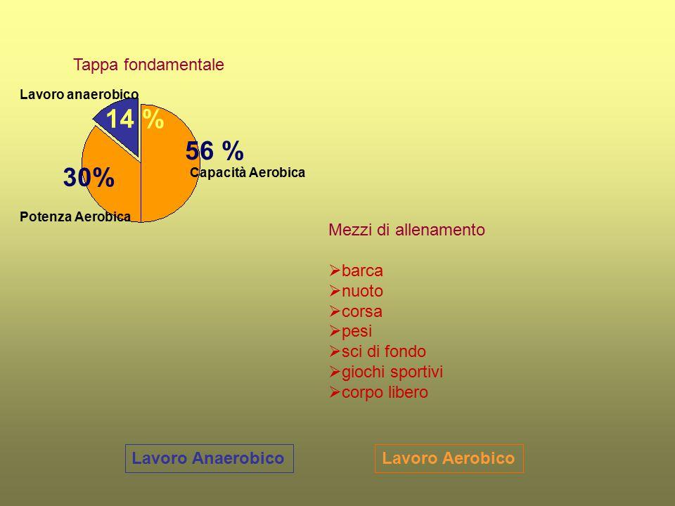 Lavoro AerobicoLavoro Anaerobico Tappa fondamentale Capacità Aerobica Potenza Aerobica Lavoro anaerobico 56 % 14 % Mezzi di allenamento  barca  nuot