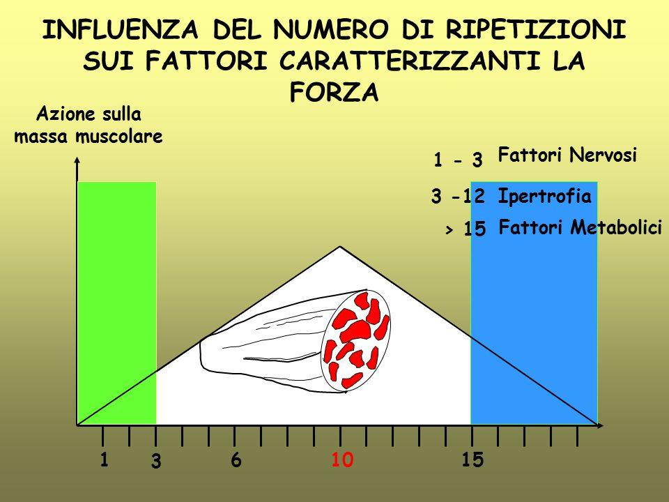 INFLUENZA DEL NUMERO DI RIPETIZIONI SUI FATTORI CARATTERIZZANTI LA FORZA 3 161510 Azione sulla massa muscolare 1 - 3 3 -12 > 15 Fattori Nervosi Ipertr